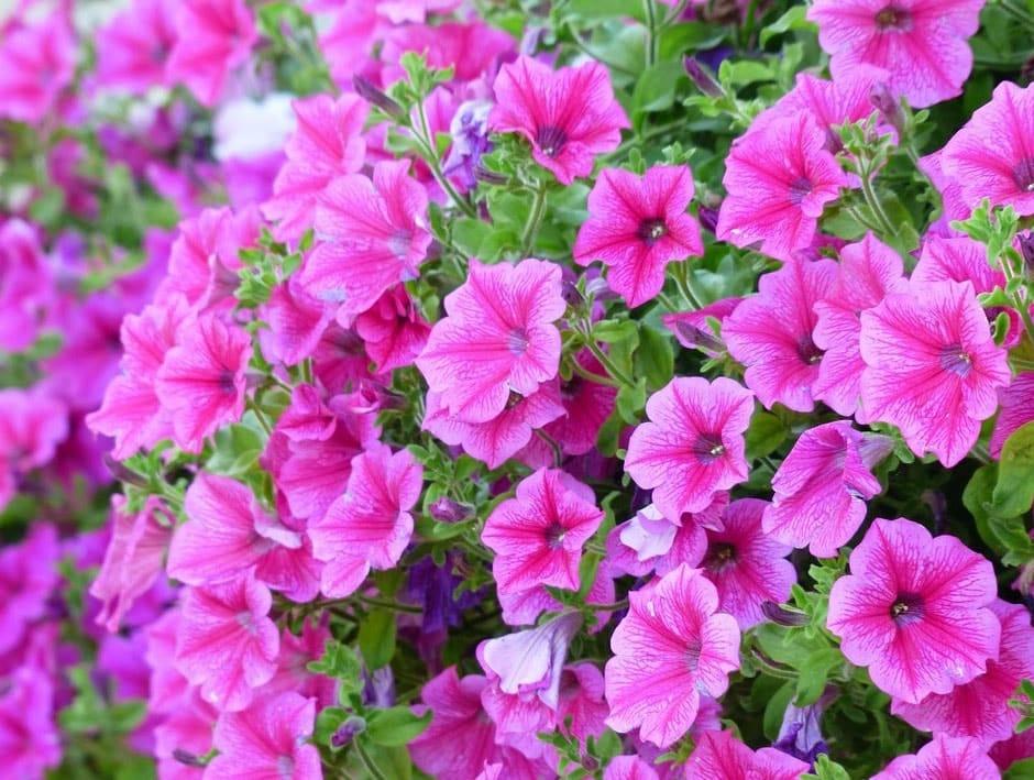 Quelles fleurs planter à l'automne - Madmoizl Déco